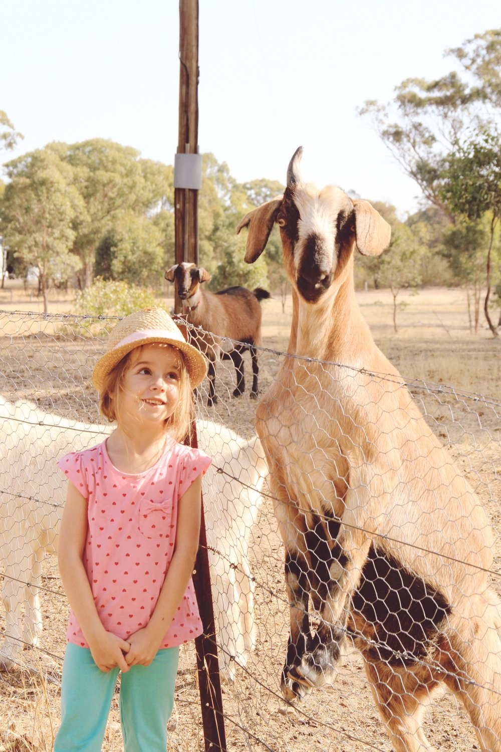 Kids love farm stays! Here's Ella with Ruffy, the one-horned goat.
