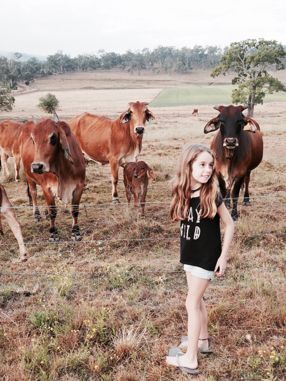 Ella loved picking oranges and feeding them to the super friendly cows. Who knew cows loved oranges?