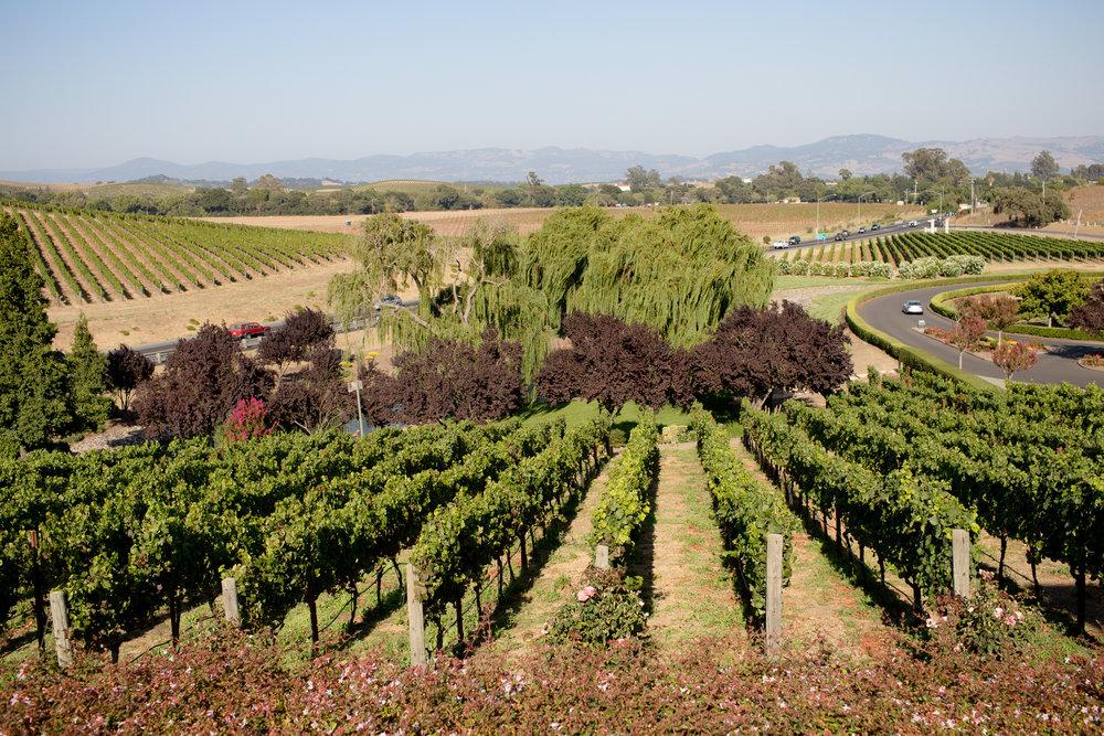 california-travel-photography-anna-mcclellan-photography-5767.jpg