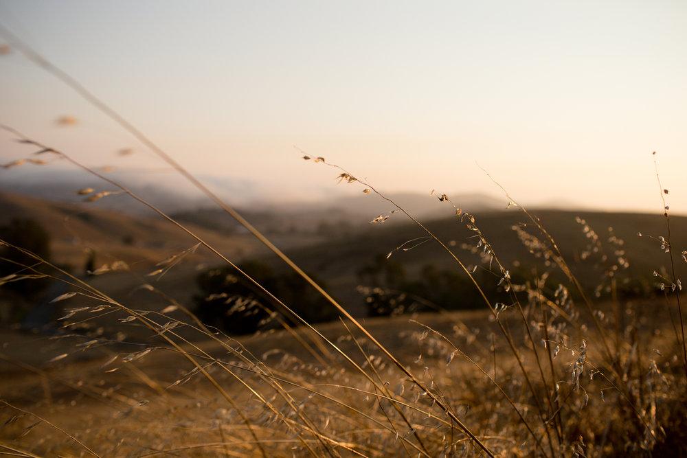 california-travel-photography-anna-mcclellan-photography-5800.jpg