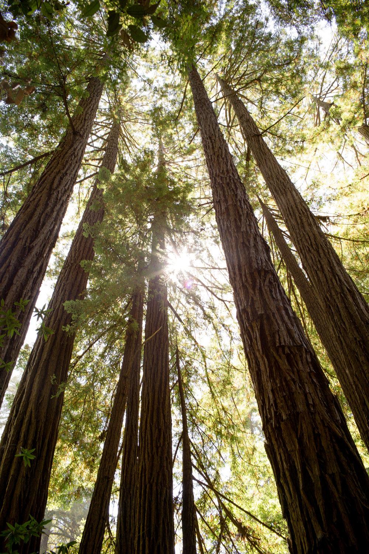 california-travel-photography-anna-mcclellan-photography-5864.jpg