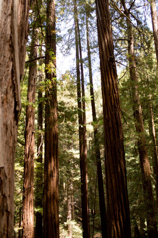 california-travel-photography-anna-mcclellan-photography-5880.jpg