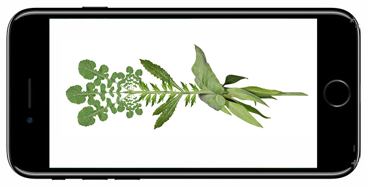flora-phone_4.jpg