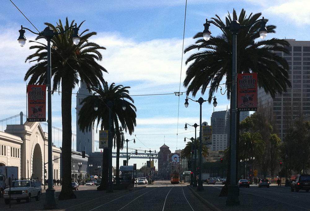 palm-street.jpg