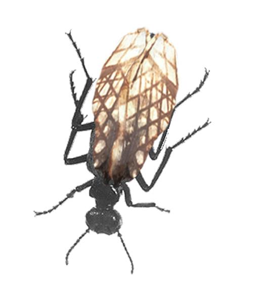 mesh-beetle_scale.jpg
