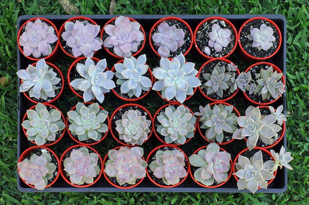 pinkandpurplesuculents
