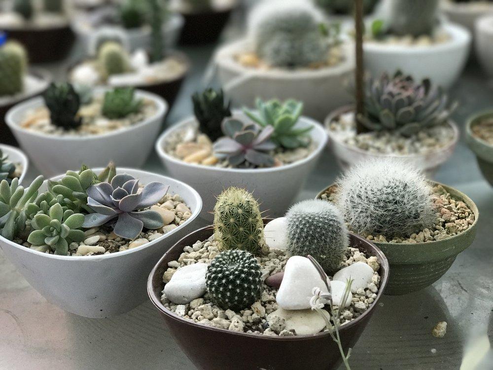 Succulents Online Filler pic2.jpg