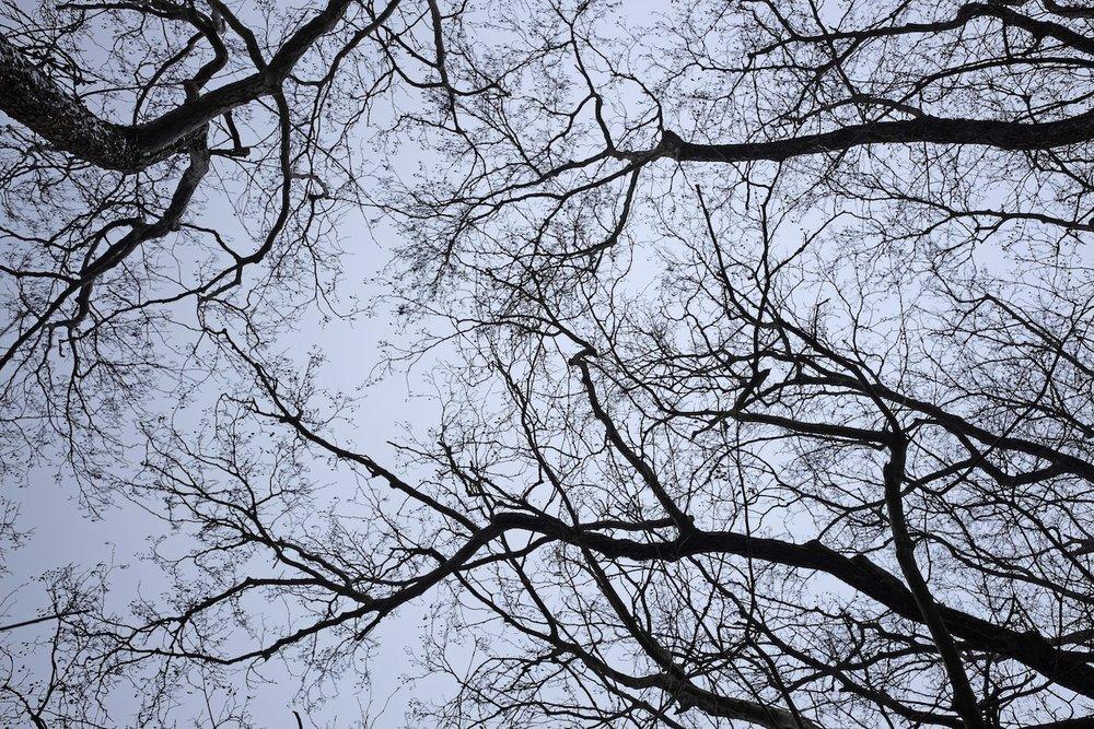 18_Wolletz_Winter.JPG