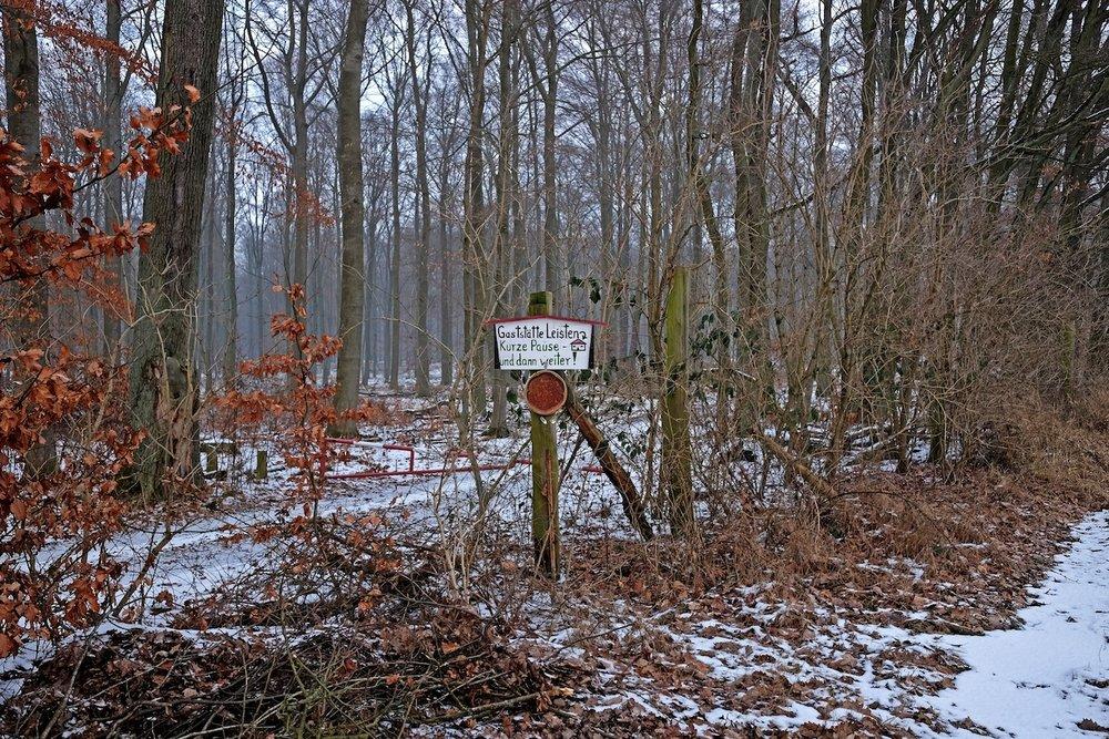50_Grimnitzsee_Wald.JPG