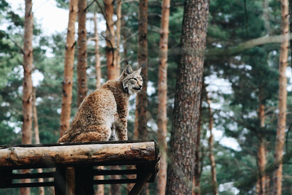Wildpark05.jpg