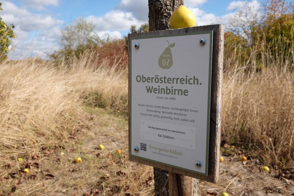 Ribbeck_Radtour_wecyclebrandenburg39.JPG