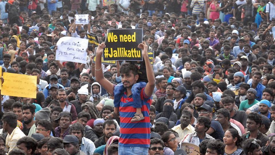 contests-jallikattu-supreme-protest-demanding-traditional-reverse_949dceae-def2-11e6-84f6-f9b2ee092ea6.jpg