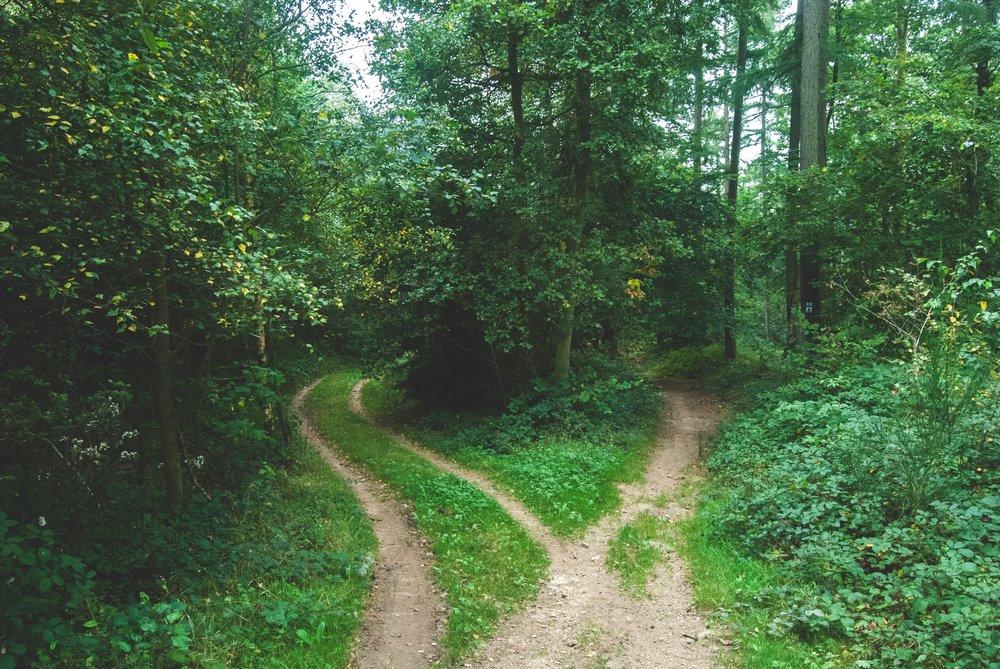 Two-Paths-jens-lelie-15662.jpg
