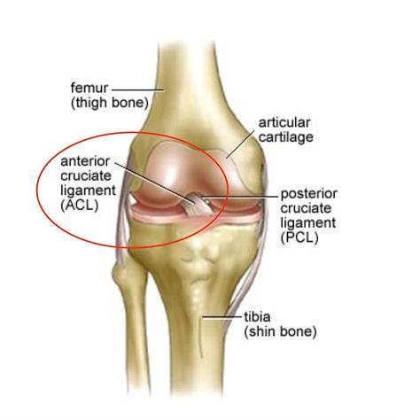 Danielle's Knee Clinic - ACL — Bonne Santé