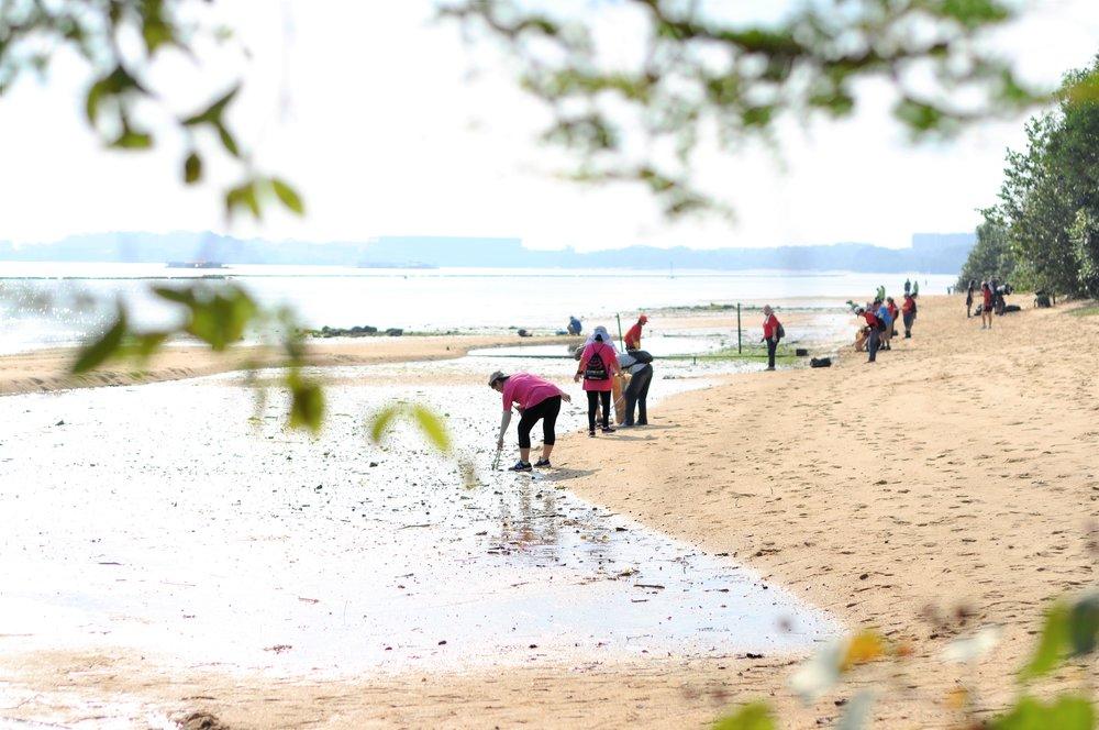 在白沙海滩为我们的海洋尽一份绵力