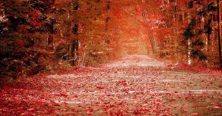 十月的北国.jpg