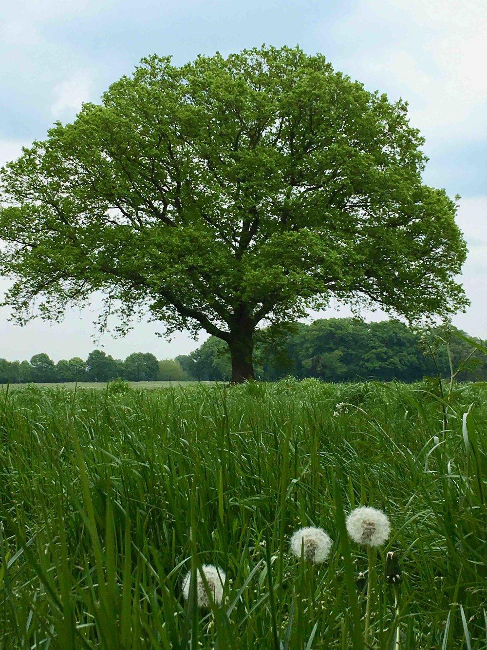 grüner Baum.jpg