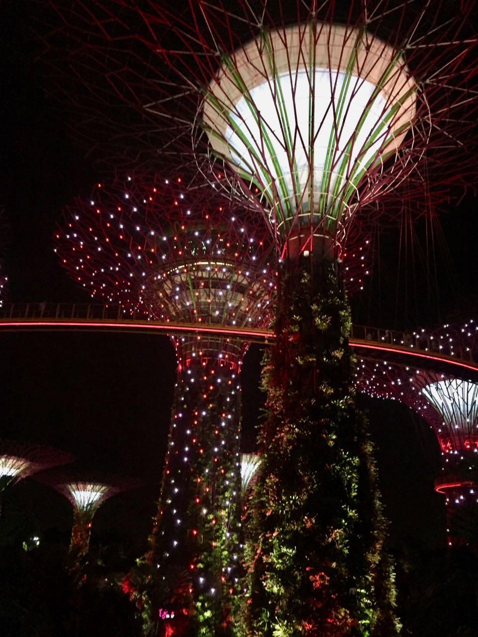 supertree by night.jpg