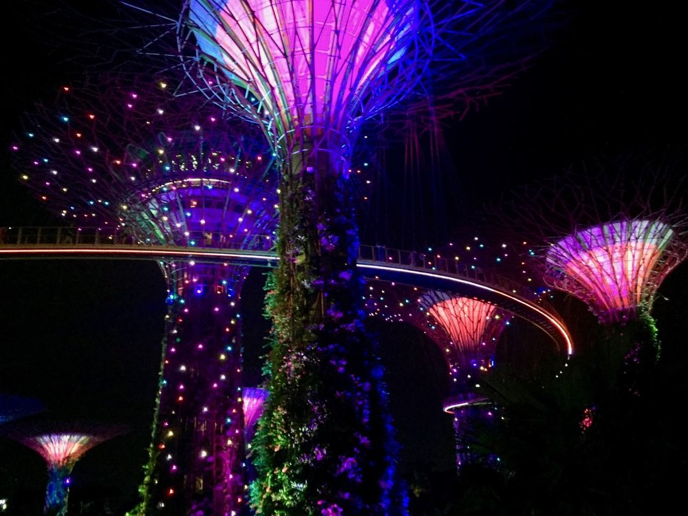 supertrees by night.jpg