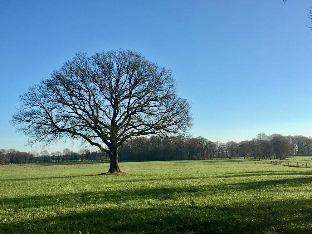Lieblingsbaum im Winter