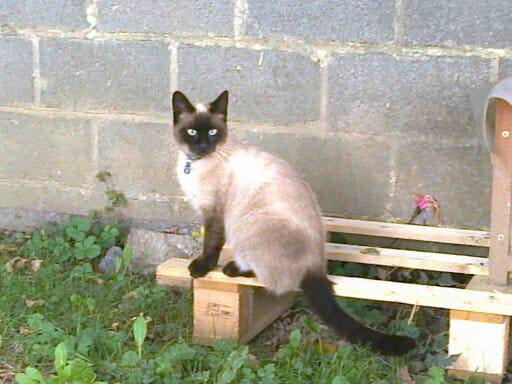 chat perdu .jpg