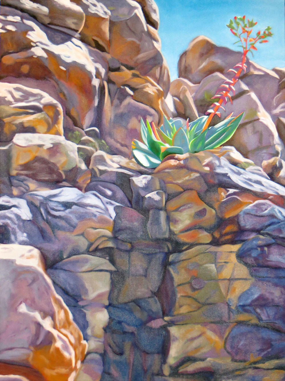 Dudleya on the Rocks