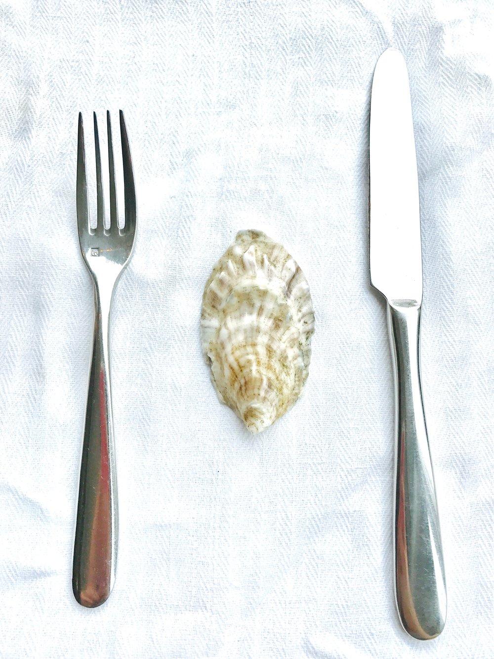 A thin, beautiful oyster shell.
