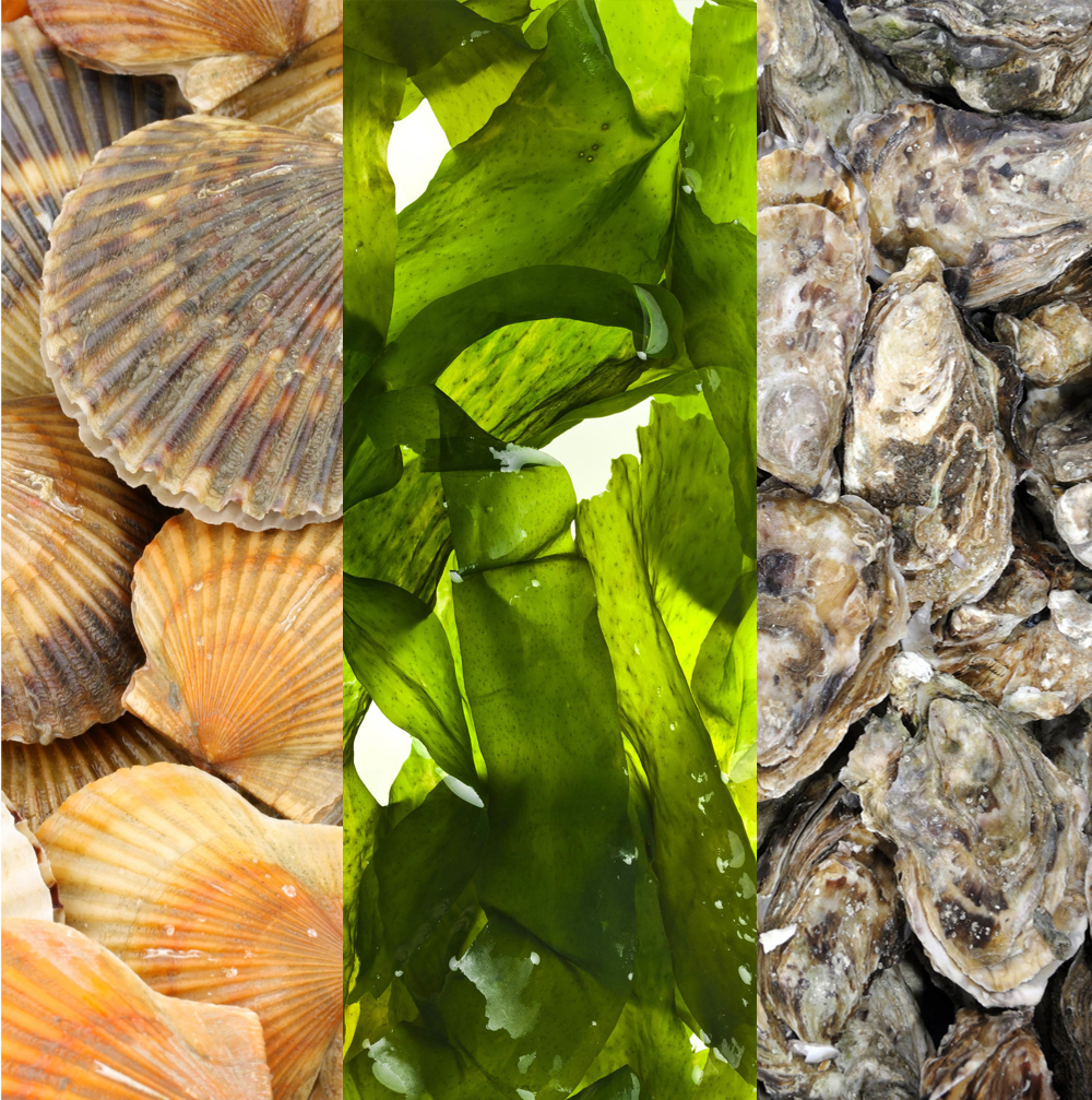 """Otter Cove Farms - """"My aim is to get an oyster as closeto 'organic' as possible."""""""