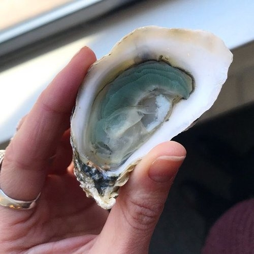 A world of ocean in one bite.