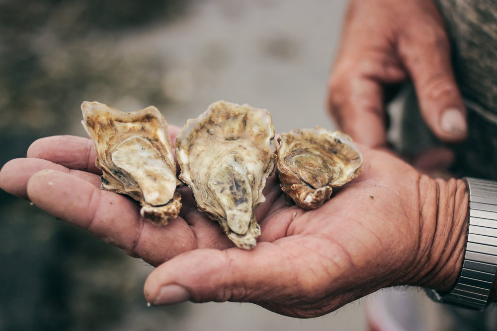 Sandbar Oyster Co oysters. Source: Photographed by Megan from Thistle and Sun Photography. www.thistleandsun.com