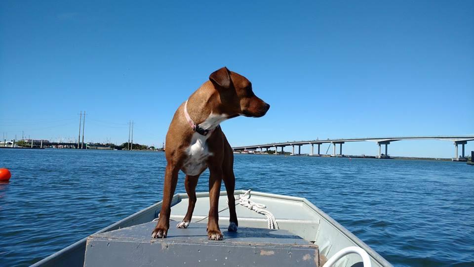 Nikki, the best boat companion.