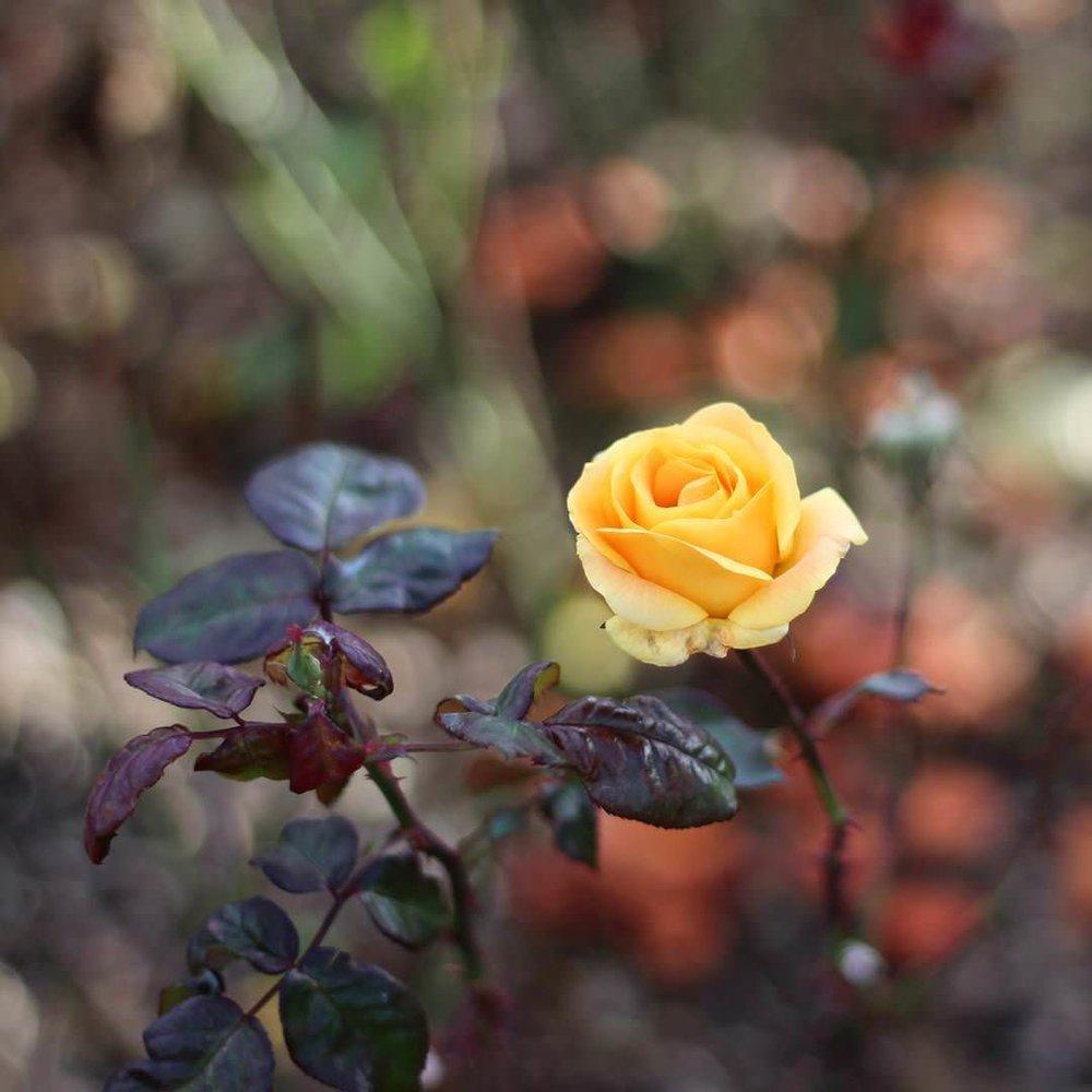 captured.by.andrea rose.jpg