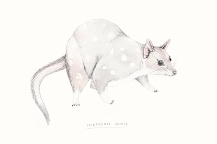 amy_borrell_marsupials.jpg