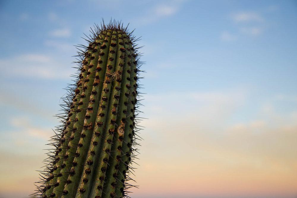 Pachamama-Mexico-1049.jpg