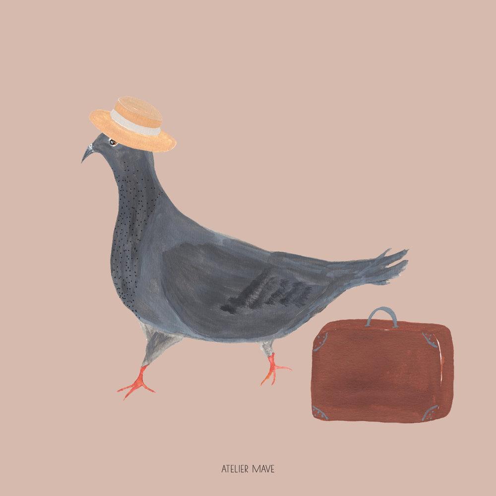 summer pigeon.jpg