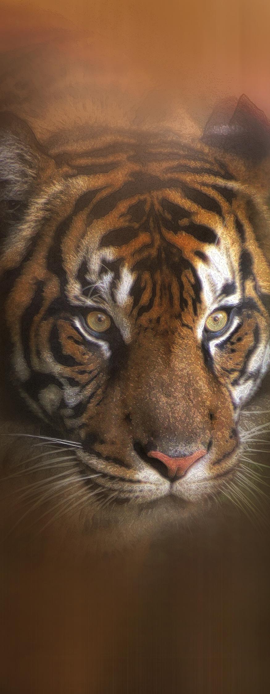 tiger head portrait right 3.jpg