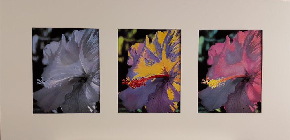 Hibiscus Trilogy