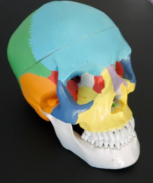 Traumatic brain injury.jpg