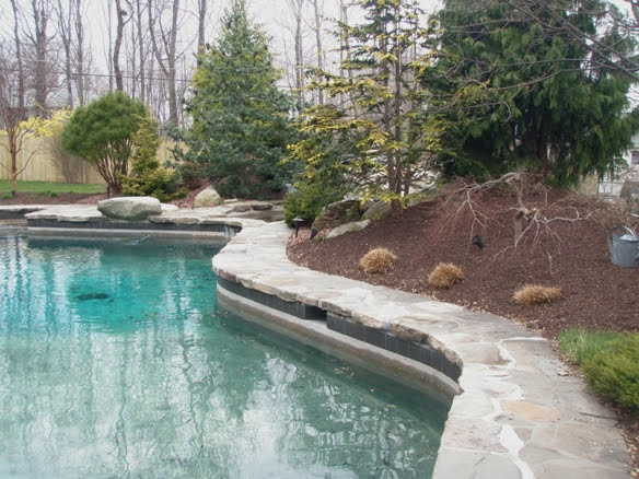 Poolside Landscape Before
