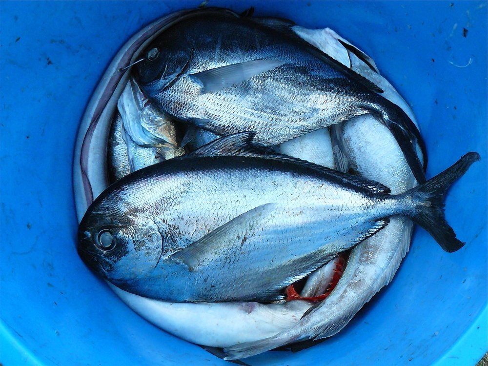 bucket-catch-fish-52964.jpg