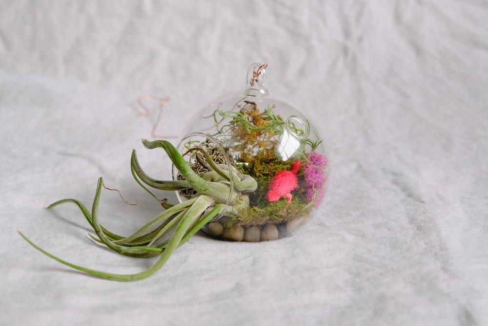 shop+pic+caput+medusae.jpg