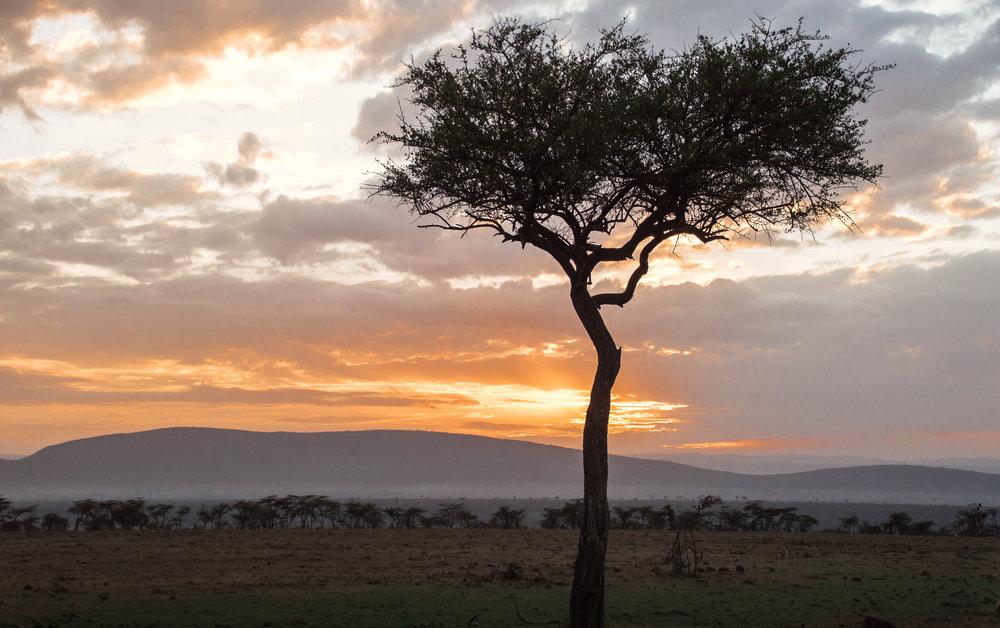 African Safari Couple's Getaway Masai Mara