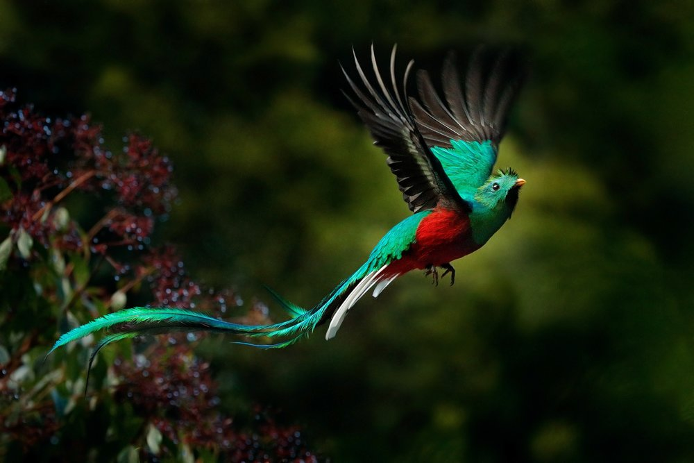 - In 2009 the site was declared an Important Bird and Biodiversity Area by Birdlife International, with 265 avian species occurring there including many highland endemics such as the magnificent Resplendent Quetzal – considered by many to be the most beautiful bird in the world and revered by the Mayan K'iche people as a sacred symbol of liberty which today adorns the Guatemalan flag.