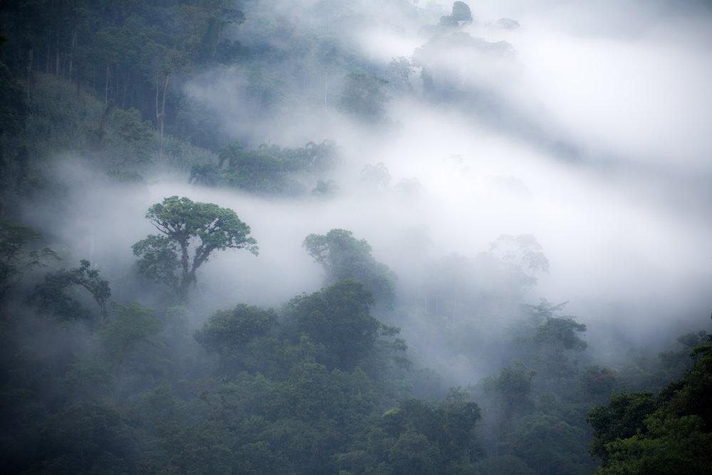 Only a few thousand acres of remaining rainforest. -
