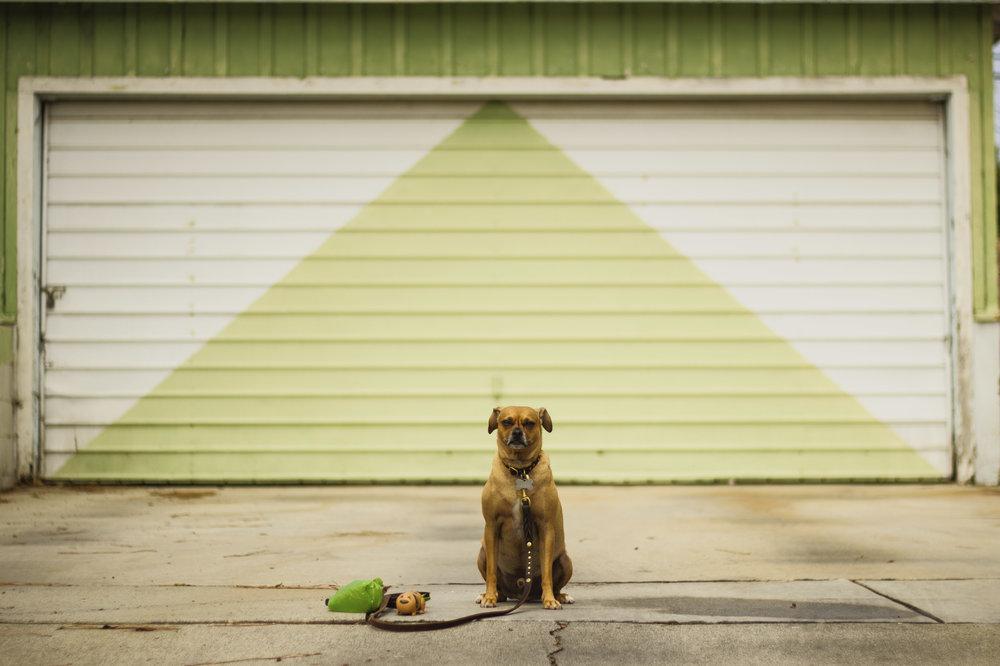 ollie_garage.jpg