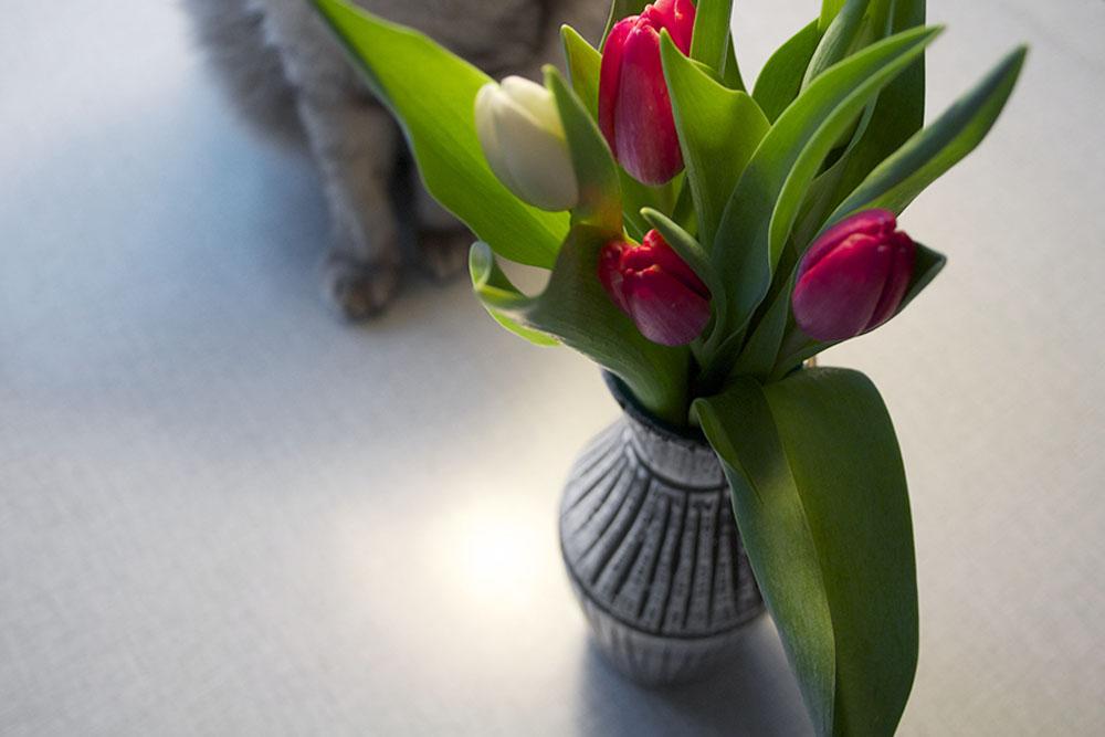 tulipan_2