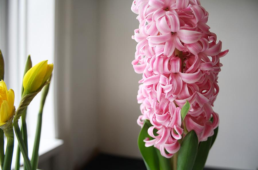 spring_4_stormsmagsin