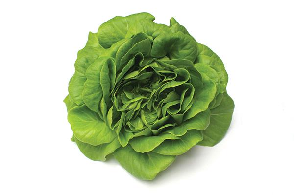 Greenbutter Lettuce