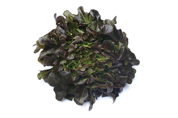 Redoak Lettuce