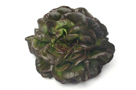 Redbutter Lettuce